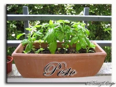 pesto_1