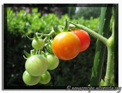 pomodorini-27062009